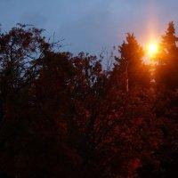 Осенний вечер :: Анастасия Макарова