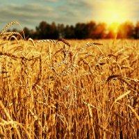 Будет урожай :: Дмитрий Конев