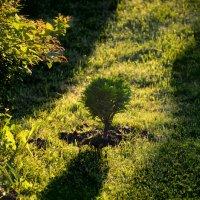 Свет и тень... :: Михаил Болдырев