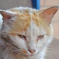 Обычный кот :: Sosed_5442 Полтавец Александр