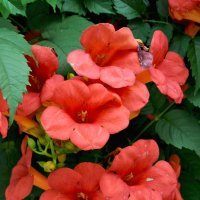 Опять цветочки :: Светлана Асекритова