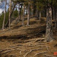 Деревья :: Алексей Обухов