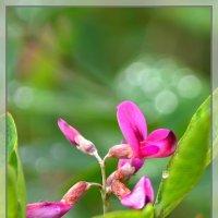 Цветы и капли. :: Helen Helen