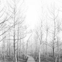 Лес болотный :: Genych