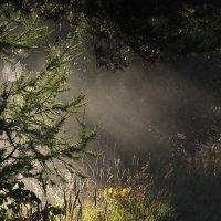 туман... :: svetlana