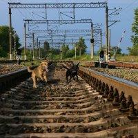 Отставшие от поезда. :: Anatol Livtsov