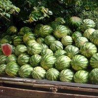 Выбираем херсонские арбузы! :: Нина Корешкова