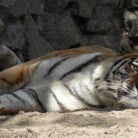 питомцы Новосибирского зоопарка :: Евгений Фролов