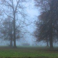 Туманное утро :: Alexander Asedach