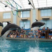Летающие дельфины :: Евгений Леонтьев