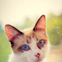 Кошка :: Татьяна Трухачева