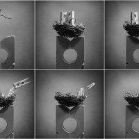 Гнездо :: Виктория Иванова
