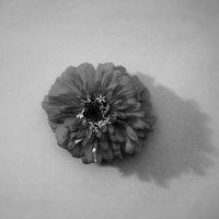 Цветок :: Алексей Бартош