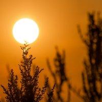 стражи солнца :: Алексей -