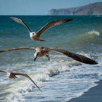 Чайки в Лиске :: Бруно Преэс