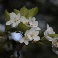 Цветочный хоровод-509. :: Руслан Грицунь