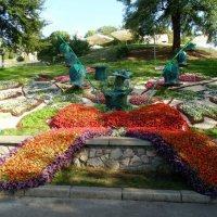 Выставка цветов в Киеве :: Ростислав