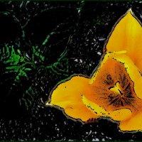 Жёлтый-прежёлтый тюльпан :: Нина Корешкова