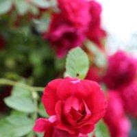 Цветочный хоровод-512. :: Руслан Грицунь