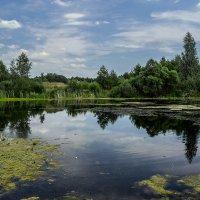 Озеро. :: Владимир Фисенко