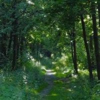forest :: Юлия Денискина
