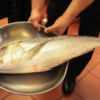Рыба :: Любовь Бутакова