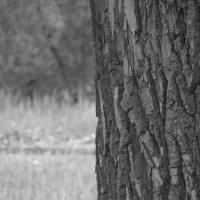 дерево :: Александр Рыженко