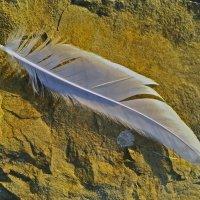 Вот чайка пролетела... :: Константин Николаенко
