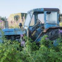 Заблудившийся трактор :: Сергей Вахов