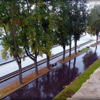 Дождь, набережная реки Великой :: Fededuard Винтанюк