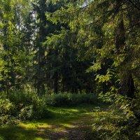 Утренний лес :: Юрий