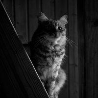 на лестнице :: SvetlanaLan .