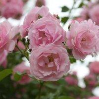 Цветочный хоровод-520. :: Руслан Грицунь