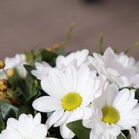 Цветочный хоровод-525. :: Руслан Грицунь