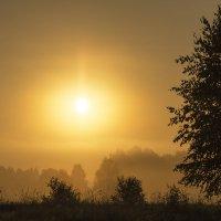 Утром в туман :: Александр