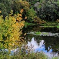 Поджигает осень тайны лета... :: Лесо-Вед (Баранов)
