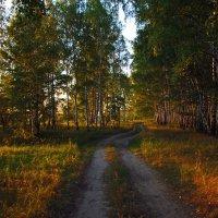 Дорога вдоль опушки :: Дмитрий Симонов