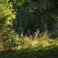 В лесу....Опушка. :: Юрий