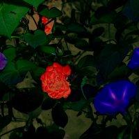 всегда есть один цветок, который выглядит по-особенному :: Юрий Гайворонский
