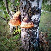 Древесный гриб :: Алексей Симаков