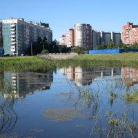 Городской пруд. :: Валентина Жукова