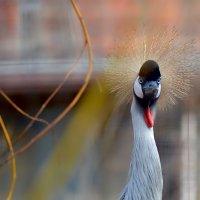 Птицы - одни из интереснейших и удивительных созданий на Земле :: kirm2 .