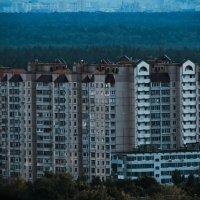 С крыши :: Ольга Лисьева