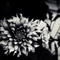 Осенние цветы :: Людмила Самойлова