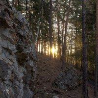 Утро в лесу :: Иван Верхотурцев