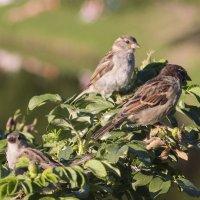 Птички :: Aнна Зарубина