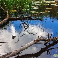Лесное озеро :: Денис Пересыпкин