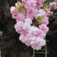 Цветочный хоровод-532. :: Руслан Грицунь