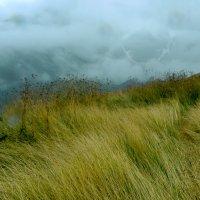 Трава на вершине горы Чегет :: Zifa Dimitrieva