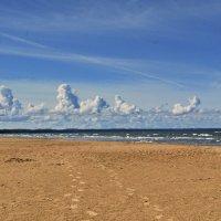 пейзаж у моря :: linnud